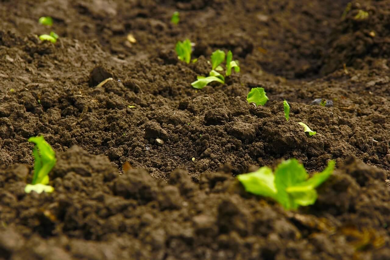 rich-soil-image