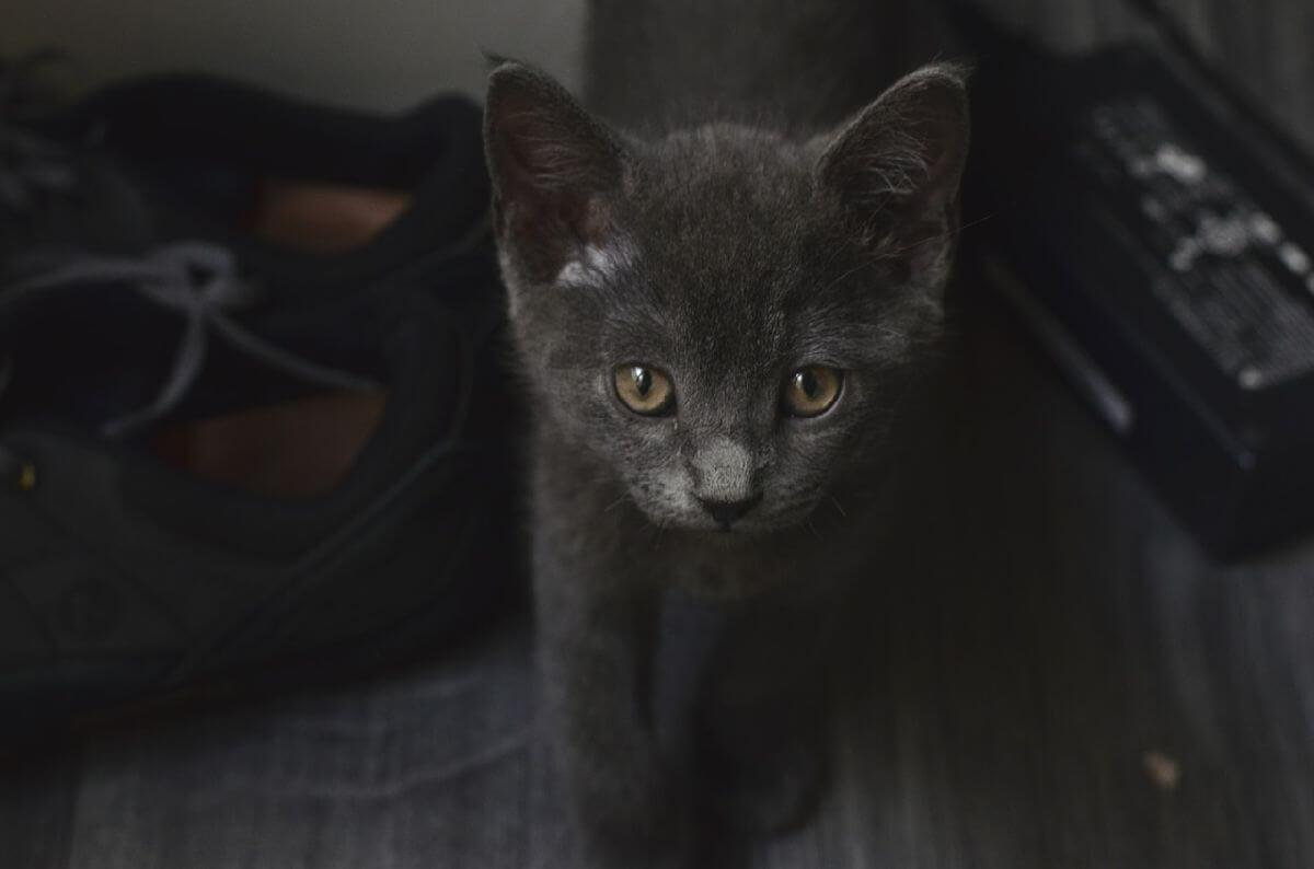 black-cat-image