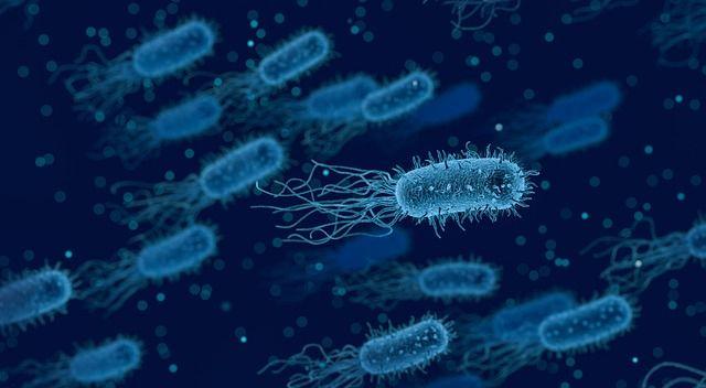 ウイルスと細菌のうち、細菌(バクテリア)のイメージ画像