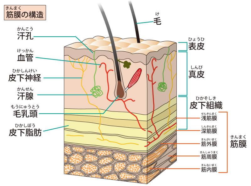 hifu-image