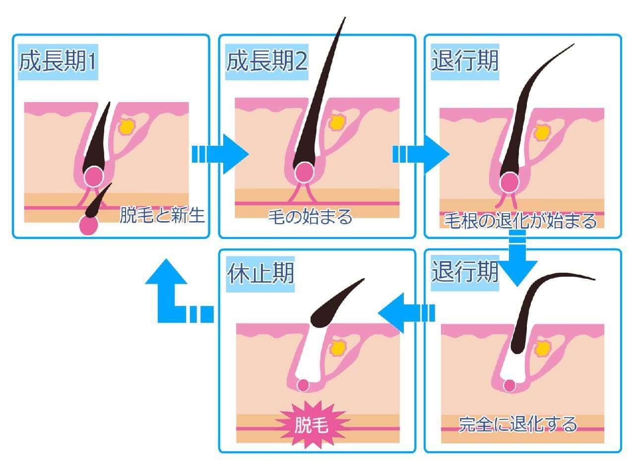 Eyebrow root image