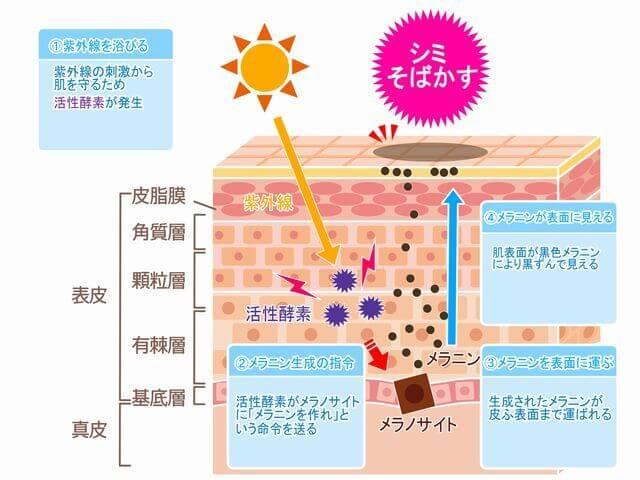 hifu-no-kouzou-image